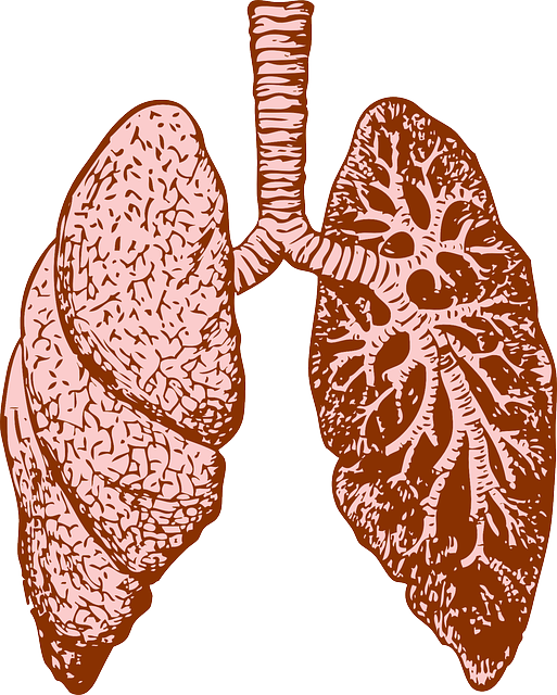 lungs excercises